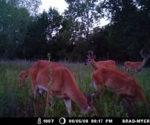 Nice group of deer