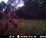 Nice bucks
