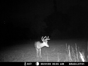 Buck in Oklahoma