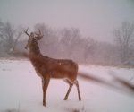 Cool Buck in the snow